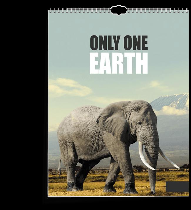 burde-eco-line-earth-tiny